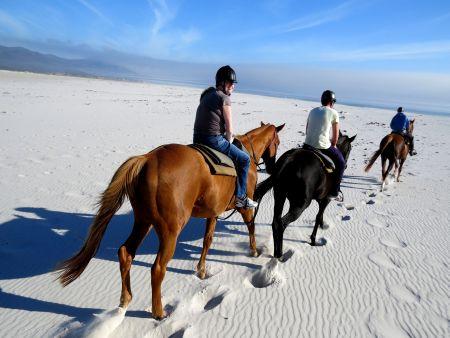 Beach horse riding, Noordhoek. Mariner Guesthouse. Simon's Town.